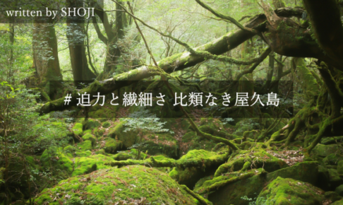 """【屋久島を楽しむ旅行プラン】太古の自然を感じる """"5つの観光名所"""""""
